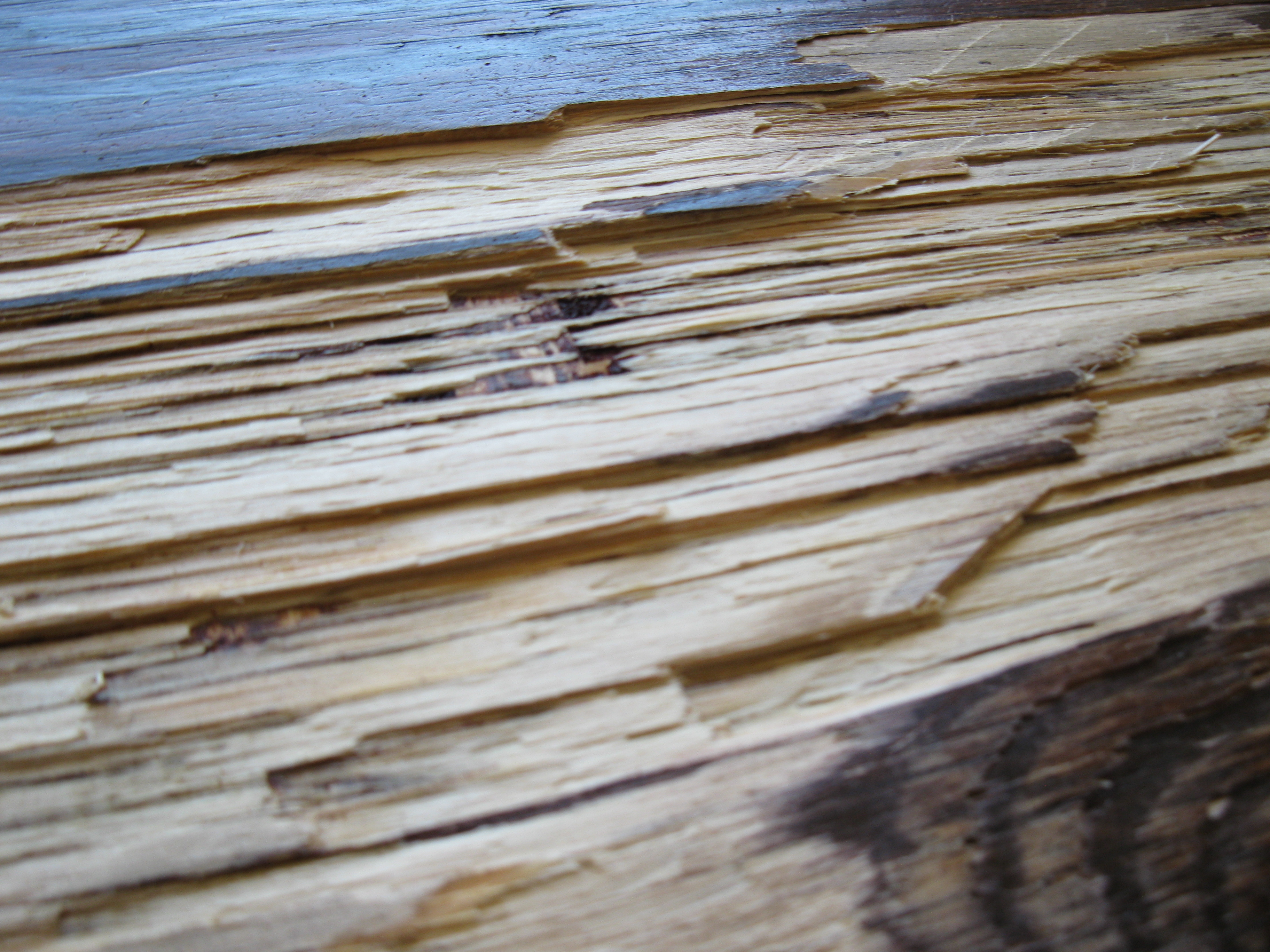 plywood-closeup-depth.jpg